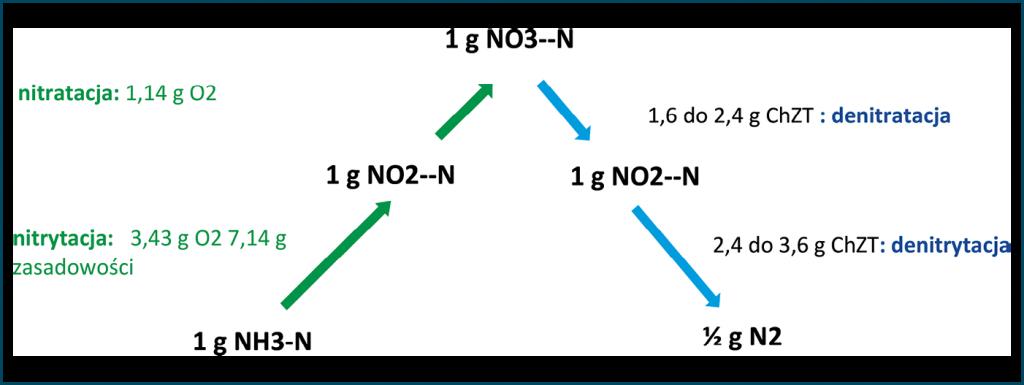 Rys. 3. Zmodyfikowany schemat przedstawiający ścieżki przemian azotu w procesach nitryfikacji (linia zielona), denitryfikacji (linia niebieska) oraz anammox (linia czerwona)