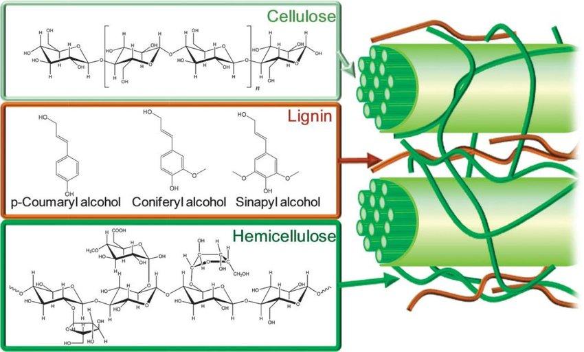 Rys. 2 Struktura biomasy lignocelulozowej [Alonso et al 2012]