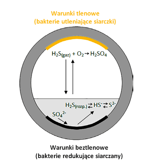 Rys. 1 Schemat przebiegu korozji biologicznej w kanalizacji [12]