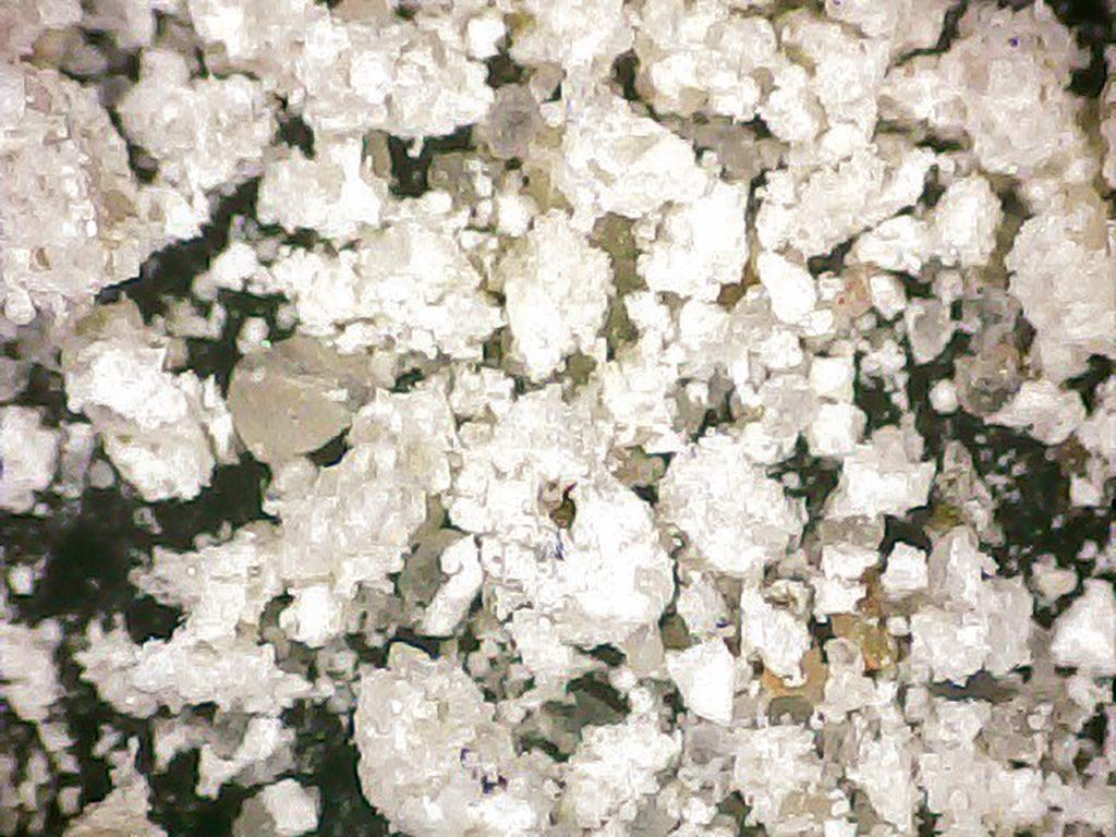 Rys. 6 b Obraz mikroskopowy wykwitów korozyjnych pobranych z powierzchni betonu (powiększenie x 20)